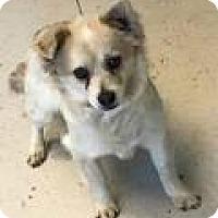 Adopt A Pet :: Dan - Shawnee Mission, KS