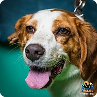 Adopt A Pet :: Honey - Evansville, IN