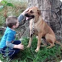 Adopt A Pet :: Kiara - Brattleboro, VT