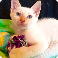 Adopt A Pet :: Maddox - Cerritos, CA