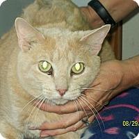 Adopt A Pet :: ChooChoo - Mexia, TX
