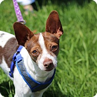 Adopt A Pet :: FRANKIE - Denver, CO