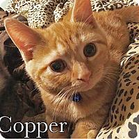 Adopt A Pet :: Copper - Trevose, PA
