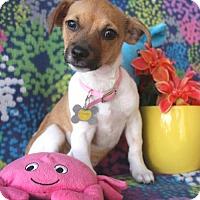 Adopt A Pet :: Elvira - Phoenix, AZ