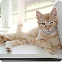 Adopt A Pet :: Lillie - Waynesville, NC