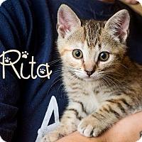 Adopt A Pet :: Rita - Somerset, PA