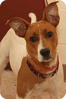 Basenji Mix Dog for adoption in McDonough, Georgia - RIPLEY