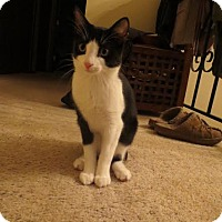 Adopt A Pet :: Maya - Eagan, MN