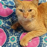 Adopt A Pet :: Gilmore - Randleman, NC