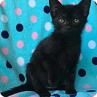 Adopt A Pet :: Leonardo - Tampa, FL