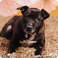 Adopt A Pet :: Rocky - Portland, OR