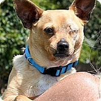 Adopt A Pet :: Emily - Santa Barbara, CA