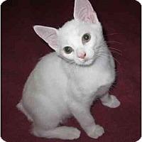 Adopt A Pet :: Tucker - Richmond, VA