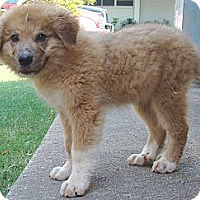 Adopt A Pet :: Russo  *Adopted - Oklahoma City, OK