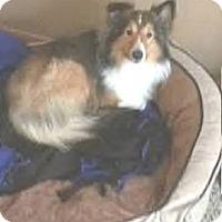 Adopt A Pet :: Luke - Circle Pines, MN