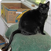 Adopt A Pet :: Sarah (Serenity) - N. Berwick, ME