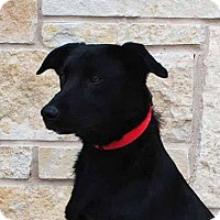 Adopt A Pet :: Maisey - Weatherford, TX