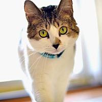 Adopt A Pet :: Sophia - Eagan, MN