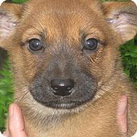Adopt A Pet :: Waldo - Albany, NY