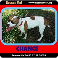 Adopt A Pet :: Chance - Milton, GA