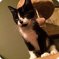 Adopt A Pet :: Bermuda - Hamilton, ON