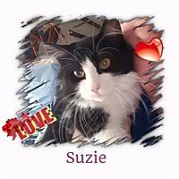 Adopt A Pet :: Suzie - Harrisburg, NC