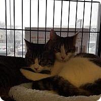 Adopt A Pet :: Hawthorne - Berkeley Hts, NJ