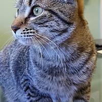Adopt A Pet :: Mocha - Duluth, GA