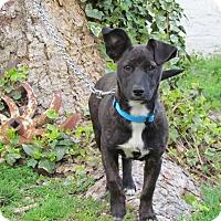 Adopt A Pet :: TRINA - Bedminster, NJ