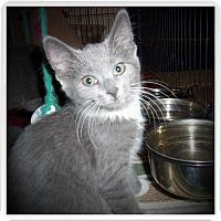 Adopt A Pet :: JADE - Medford, WI