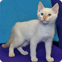 Adopt A Pet :: Gavin - Lenexa, KS