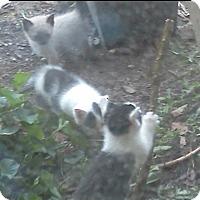 Adopt A Pet :: kitties - McArthur, OH