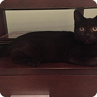 Adopt A Pet :: Harley - Trenton, NJ