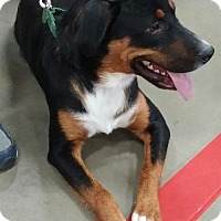 Adopt A Pet :: Ryder 10 month old Beautiful boy! - Rowayton, CT