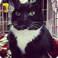 Adopt A Pet :: AUGUST! - Philadelphia, PA