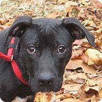 Adopt A Pet :: Buddy-Look at me please! - Harrisonburg, VA