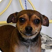 Adopt A Pet :: Bindi - Brunswick, ME