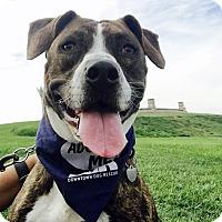 Adopt A Pet :: Rainbow - I walk well on leash - Los Angeles, CA