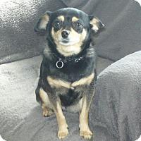 Adopt A Pet :: Molly 3331 - Toronto, ON