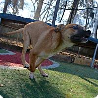 Adopt A Pet :: Tigger - Mechanicsburg, PA