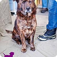 Adopt A Pet :: Bear - Ottawa, ON