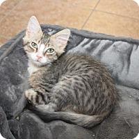 Adopt A Pet :: Sundance - Cypress, TX