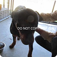 Adopt A Pet :: Bruno-URGENT Rescue Only - Rocky Mount, NC