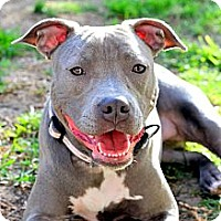Adopt A Pet :: Blueberry - Houston, TX