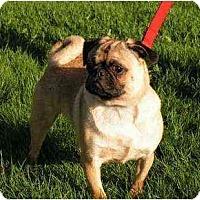 Adopt A Pet :: Simba - Rigaud, QC