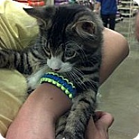 Adopt A Pet :: TJ - Pittstown, NJ
