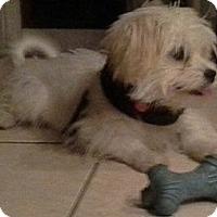 Adopt A Pet :: Fiona - San Dimas, CA