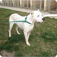 Adopt A Pet :: Several - Sierra Vista, AZ