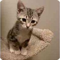 Adopt A Pet :: Du Soleil - Milwaukee, WI