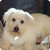 Adopt A Pet :: Teddy - MEET HIM - Norwalk, CT